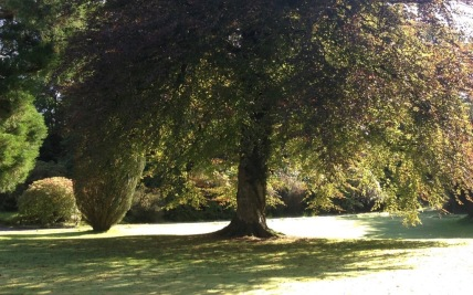 Mature trees on the estate (photo, summer)