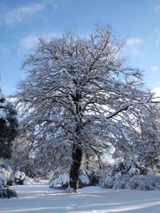 Winter snow on the estate