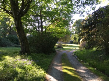The drive into the estate (spring)