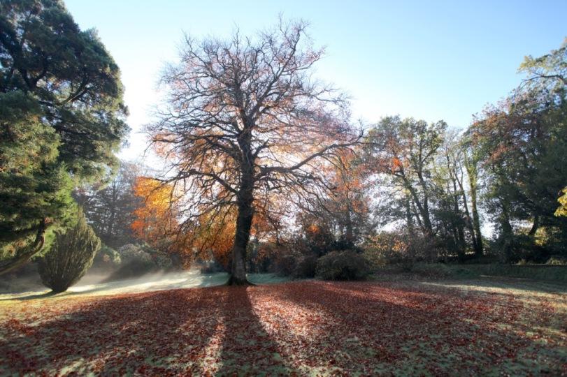 Blaenddol estate in Autumn