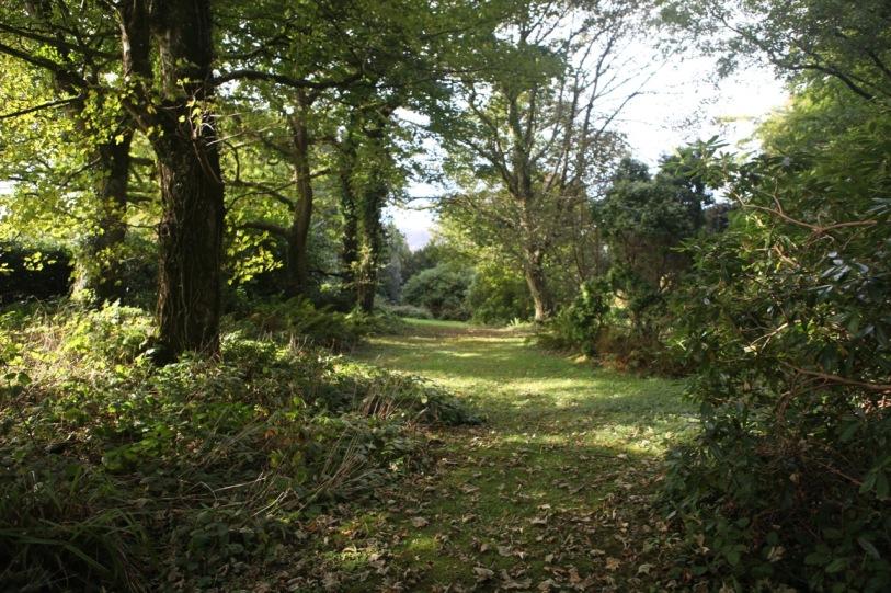 Mature woodland garden area (photo, late summer)